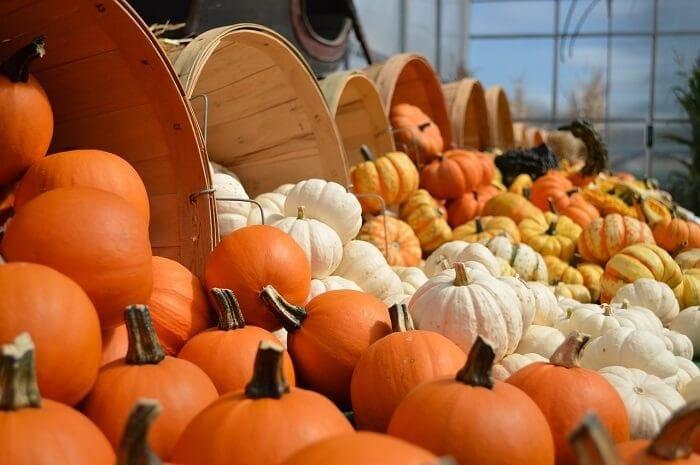 Pumpkin Race - Thanksgiving Activities